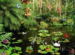 Butterflies Ponds - Windows 8 Nature Screensavers Download