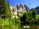 Eagles Kingdom - Windows 8 Nature Screensavers Download