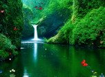Green Waterfalls Screensaver - Animals Screensavers