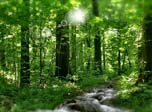 Sunny River - Windows 8 Nature Screensavers Download