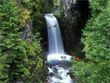 Download Free Screensavers - Charming Waterfalls Screensaver