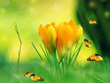 Nature Screensavers - Spring Charm Screensaver