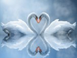 Nature Screensavers - Swan Love Screensaver
