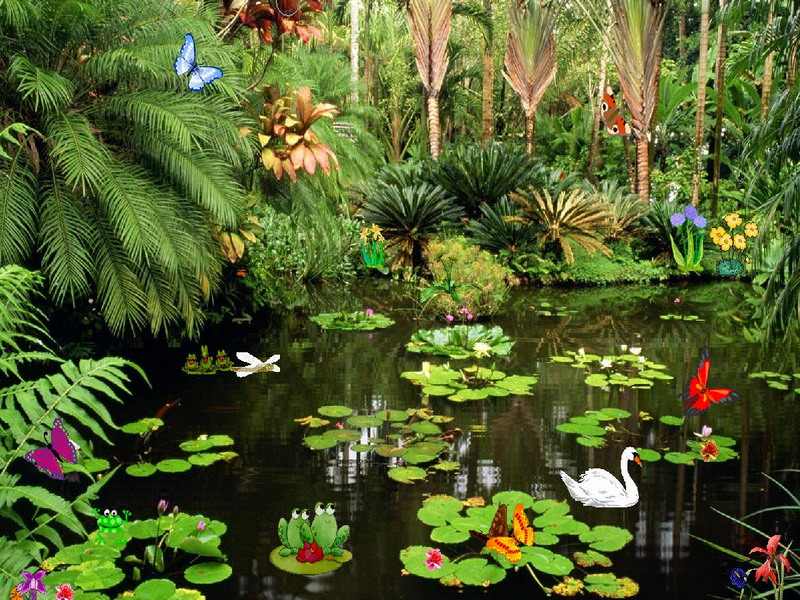 Butterflies ponds free butterflies screensaver for Koi pond screensaver