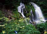 Free Popular Screensaver - Charming Waterfalls - Screenshot #1