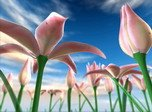 Flowers Meadow 3D - Flowers Screensaver